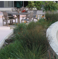 Sustainable Landscape Case Study
